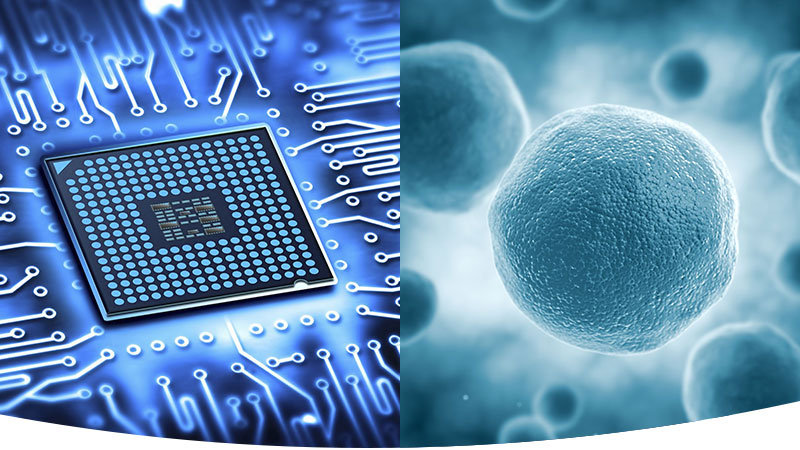 Collage of computer chip and organic cells.
