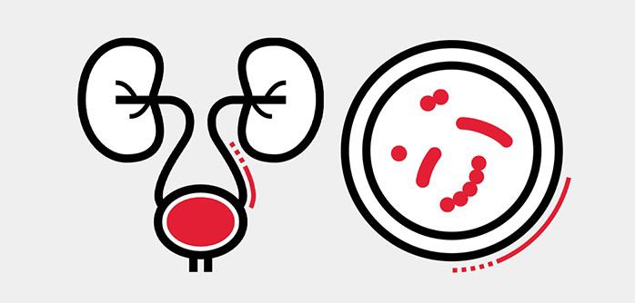 Icon illustration of the urinary system and a petri dish.