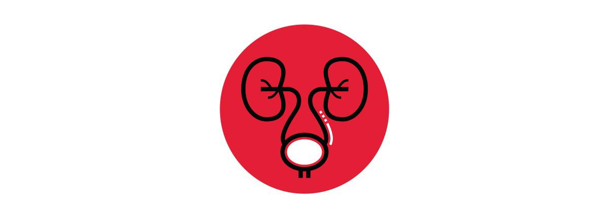 Icon illustration of the kidneys and bladder in a red circle..